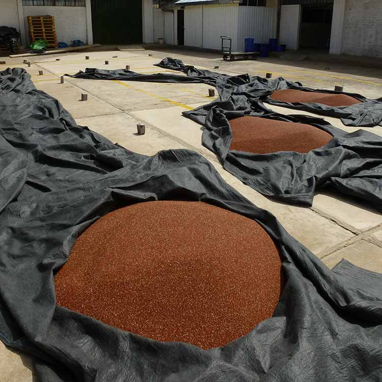 Some red quinoa being processed at the coopain cabana cooperative